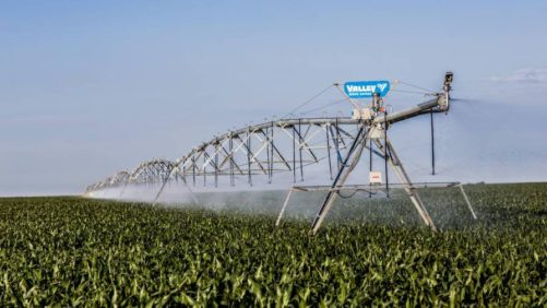Valley Irrigation 8000 series corn