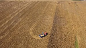 Jim Case pulls his Kinze grain cart across the field to get into position for corn harvest.
