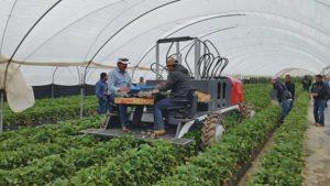 Robotics Specialty Crops