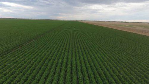 Australia crop