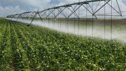 center-pivot-irrigation-drop-sprinklers-on-corn