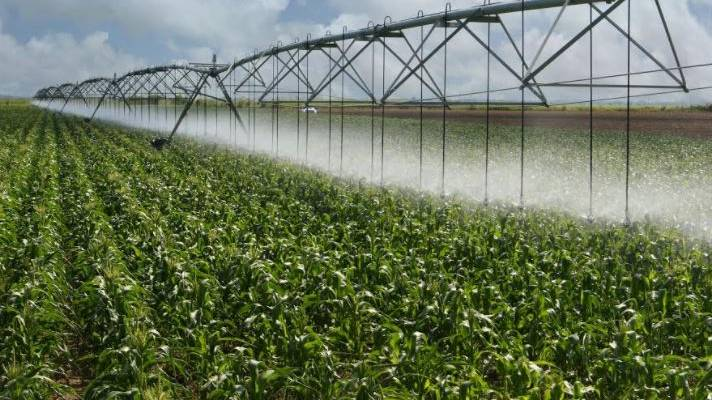 center-pivot-irrigation-drop-sprinklers-on-corn