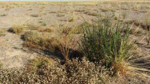 Resistant-weeds-in-Brazil