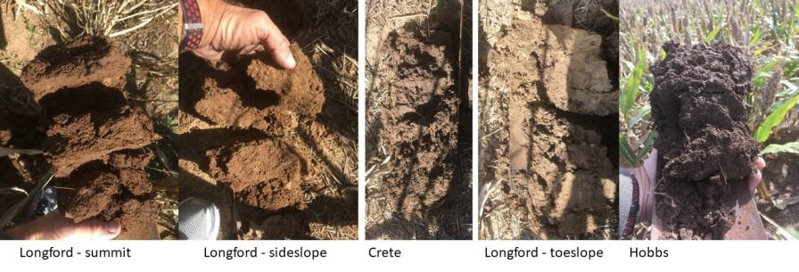 Longford-soil-images