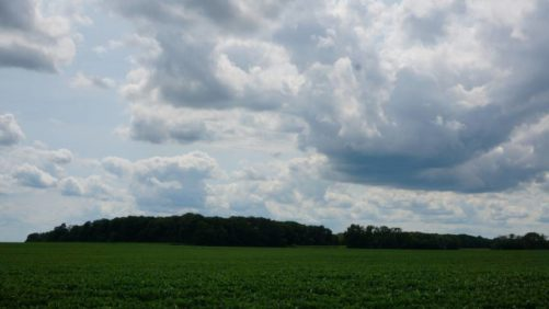 Soybean-field-clouds-Photo-courtesy-of-Earl-R-Shumaker