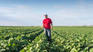Farmer-Soybean-field