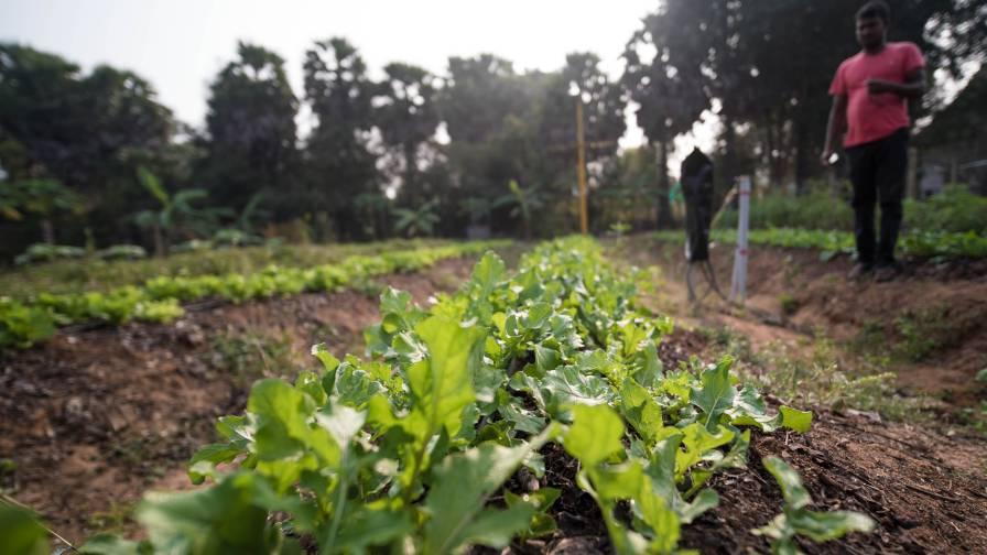 India-Farm-Irrigation