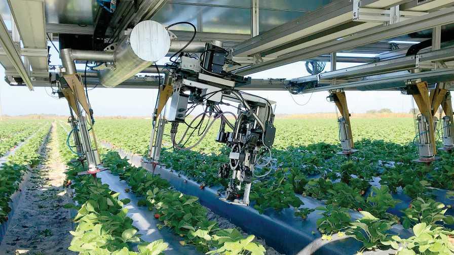 CROO Robotics' automated strawberry harvester